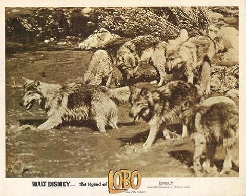 La Legende De Lobo - The Legend of Lobo Affiche du film