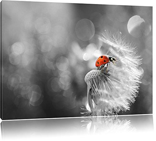 kleiner Marienkäfer auf Pusteblume schwarz/weiß Format: 60x40 auf Leinwand, XXL riesige Bilder fertig gerahmt mit Keilrahmen, Kunstdruck auf Wandbild mit Rahmen, günstiger als Gemälde oder Ölbild, kein Poster oder Plakat (Schwarz Und Weiß-unkraut-poster)