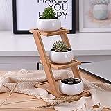 HBLJ Set 1 Set moderno in ceramica bianca minimalista vaso di fiori in vaso di piante grasse 3 piantine di bonsai con 3-Tier mensola in bambù