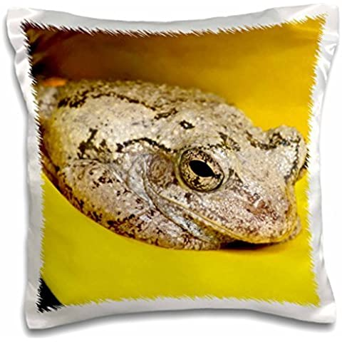 Frogs - Gray Tree Frog, Kentucky, Hyla versicolor 16x16 inch Pillow Case