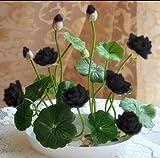 10pcs / piante idroponiche pacchetto ciotola di semi di loto piante acquatiche semi di fiori