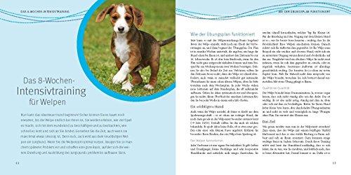 Welpen-Erziehung: Der 8-Wochen-Trainingsplan für Welpen. Plus Junghund-Training vom 5. bis 12. Monat (GU Tier Spezial) - 5