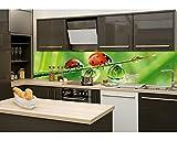 Küchenrückwand Folie selbstklebend MARIENKÄFER 260 x 60 cm | Klebefolie - Dekofolie - Spritzchutz für Küche | PREMIUM QUALITÄT