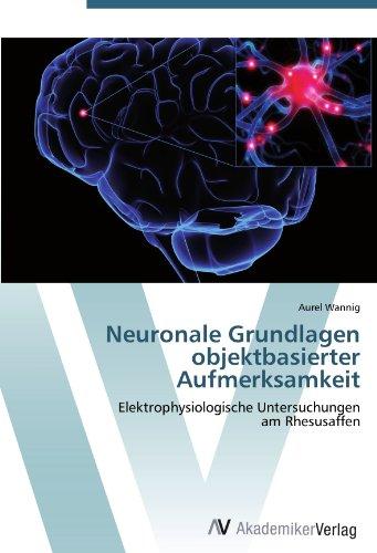Neuronale Grundlagen objektbasierter Aufmerksamkeit: Elektrophysiologische Untersuchungen  am Rhesusaffen