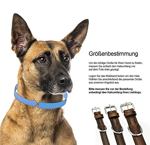Schnüffelfreunde Hundehalsband aus Leder (M – 28-36cm, Braun) - 5