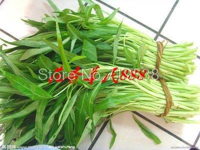 Braisés légume vert graines de légumes persil, poireau et le chou navet laitue chou oignon graines 10 graines