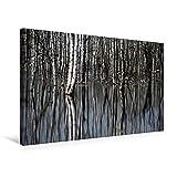 Calvendo Premium Textil-Leinwand 75 cm x 50 cm Quer, Birkenwald | Wandbild, Bild auf Keilrahmen, Fertigbild auf Echter Leinwand, Leinwanddruck: Birkenwald im Wasser - mit Spiegelung Natur Natur