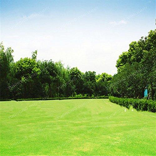 500 Pcs Rare Blue Grass Seed Graines à gazon Fleurs vivaces Jardin Terrains de soccer Villa Haute GradeOutdoor Graine de plantes 3