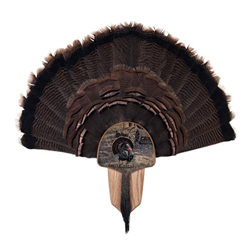 Walnuss Hohl Country Türkei Fan Mount & Display Kit Eiche mit Oster-Truthahn