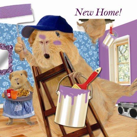 New Home, Meerschweinchen