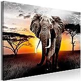 decomonkey | Mega XXXL Bilder Afrika Elefant | Wandbild Leinwand 160x80 cm Einteiliger XXL Kunstdruck zum aufhängen | Landschaft Sonnenuntergang