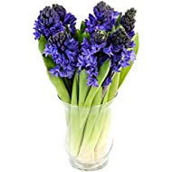Fabulously Floral Blue Hyacinth Bouquet, 8 Stems