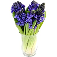 Fabulously Floral Blue Hyacinth Bouquet, 8 Stems