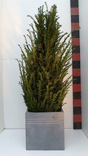'37 cm H : Bac à fleurs « leichtgewicht Bac à fleurs Cache-pot fibres Tone, gris