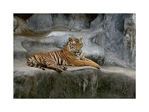 TIGER BIG CAT AFRICAN PHOTO ART PRINT FRAME WOODEN FRAMED PICTURE POSTER ART MOUNT GIFT F12X1177