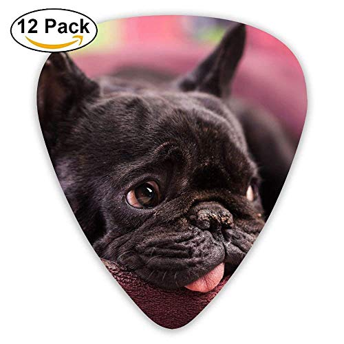 The Dog Is Resting In The Kennel Guitar Pick 12pack -