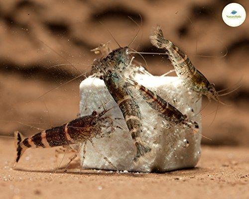 NatureHolic – MineralCube 'Pure Mineral' – 47ml - 5