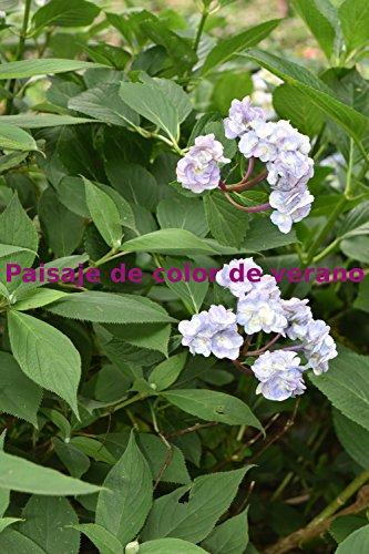 Descargar Libro Paisaje de color de verano de M HARADA