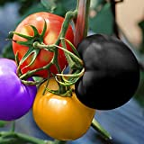 Auntwhale 100Pcs Rainbow Tomato Seeds Color Bonsai