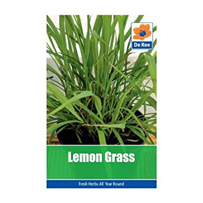 Lemon Grass Seeds : everything 5 pounds (or less!)