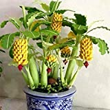 #9: 10 Type of Dwarf Fruit Seeds You Can Grow Indoor or Outdoor