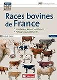 Image de Races bovines de France