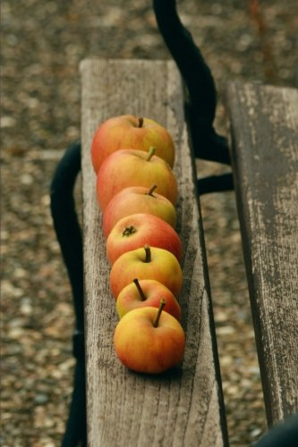 organic-red-windfall-apples-on-a-garden-bench-harvest-journal-150-page-lined-notebook-diary
