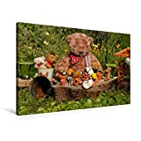 Premium Textil-Leinwand 90 cm x 60 cm quer, Garten-Bär | Wandbild, Bild auf Keilrahmen, Fertigbild auf echter Leinwand, Leinwanddruck: Teddy (CALVENDO Hobbys)