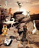 empireposter - Yoga Dogs - Canyon - Größe (cm), ca. 40x50 - Mini-Poster, NEU -