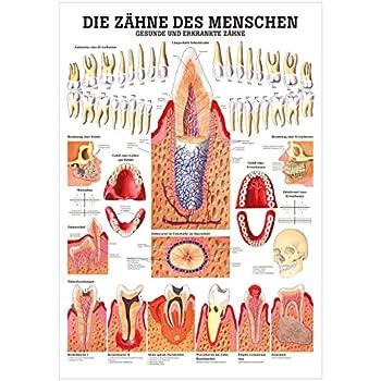 Gemütlich B Medizinische Wissenschaft Anatomie Zeitgenössisch ...