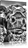 Monocrome, Süße Alpen Kuh auf Bergwiese , Format: 100x70 auf Leinwand, XXL riesige Bilder fertig gerahmt mit Keilrahmen, Kunstdruck auf Wandbild mit Rahmen, günstiger als Gemälde oder Ölbild, kein Poster oder Plakat