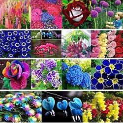 Plantree 100 Stücke Smaragd Fluoreszierende Flo: 30 X Bunte Seltene Drachen Rose Blumensamen Blumensamen Gartenpflanzen Samen