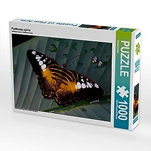 CALVENDO Puzzle Parthenos Sylvia 1000 Piezas tamaño de la Ley 64 x 48 cm Foto de Puzzle de Foto Foto Foto Foto Foto de Photon Vronja