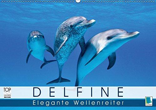 Delfine: Elegante Wellenreiter (Wandkalender 2019 DIN A2 quer): Delfine: Die Welt der verspielten Meeressäuger (Monatskalender, 14 Seiten ) (CALVENDO Tiere)
