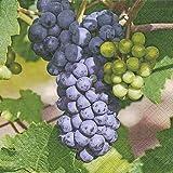 20 Servietten 33 x 33 cm Weintrauben Rebe Herbst Oktober Ernte Weinfest
