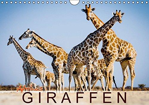 Afrikas Giraffen (Wandkalender 2016 DIN A4 quer): Tiere mit Weitblick (Monatskalender, 14 Seiten)
