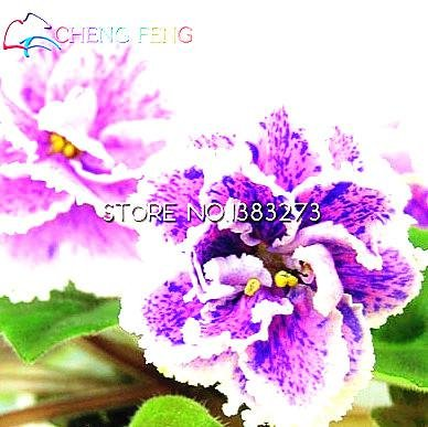 50pcs-belle-plante-bonsai-graines-de-fleurs-rouge-pourpre-africaine-mini-blue-sky-violet-graines-rar