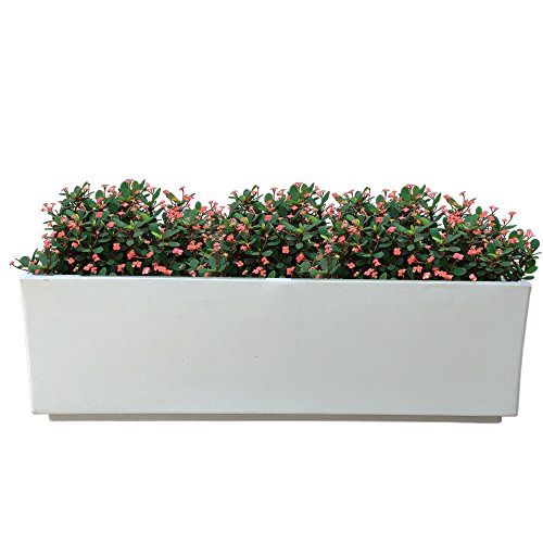 Yuccabe Italia FOX-B Box Tray Railing Hanging Rectangular White 24 Inches Planter  available at amazon for Rs.1850