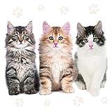 Maki Serviette Napkins 33x33cm Serviettentechnik 20St.Packg. Katzen Cats Katzenbabys