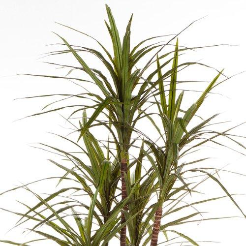 artplants – Deko Dracaena Magenta Imani, getopft, 220 Blätter, grün, 180 cm – hochwertige Kunstpalme/Künstliche Pflanze