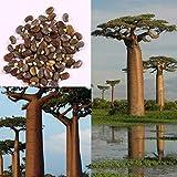 Clipss 20 unids Raras Baobab Árbol Semillas Bonsai Plantación Home Farm Garden Semillas