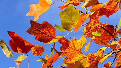 �cke Puzzle für Erwachsene Erwachsene Herbst Blatt Herbst Blätter Hintergrund DIY Kunst ()