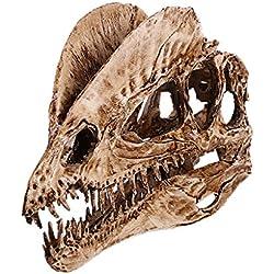 Escala 1/3 De Colección Modelo De Resina Dinosaurio Dilophosaurus Cráneo Fósil Blanco