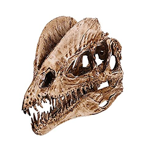 Dinosaures Fossiles - Modèle Crâne en Résine Dinosaure Dilophosaurus 1/3