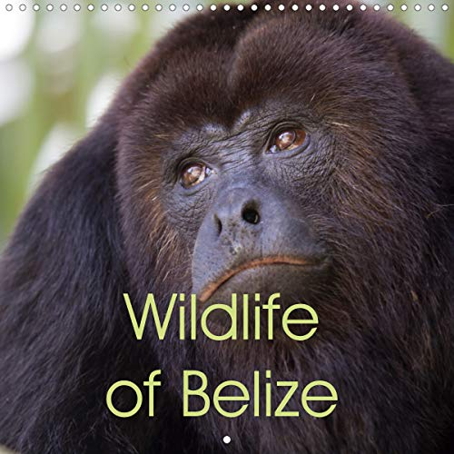 Wildlife of Belize (Wall Calendar 2020 300 × 300 mm Square): Gorgeous wildlife photos from the Central American paradise of Belize (Monthly calendar, 14 pages ) (Calvendo Nature)
