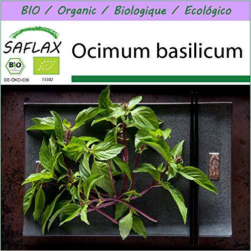 SAFLAX – BIO – Basilikum Thai – 250 Samen – Ocimum basilicum
