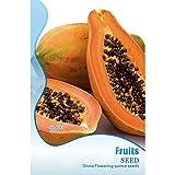 Samen Papayabaum Melonenbaum Saat Garten Obst 8 Samen/Sack