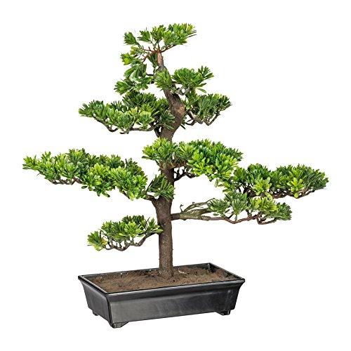 wohnfuehlidee Kunstpflanze Bonsai Podocarpus Grün, Inklusive Kunststoff-Schale, Höhe ca. 53 cm