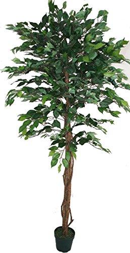 Homescapes árbol Ficus artificial, hojas verdes, 180 cm, en maceta