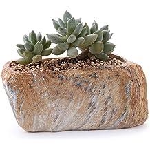 T4U Conjunto de 1 Piedra distintiva Forma Cerámicos Planta Maceta Suculento Cactus Planta Maceta Planta Contenedor